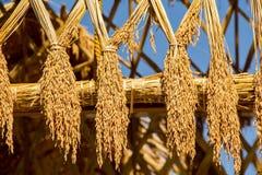 Крыша риса Стоковые Изображения RF