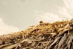 Крыша сделана из травы, крыши и неба стоковое фото rf