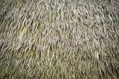Крыша соломы трав стоковые изображения rf