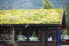 крыша травы стоковые фотографии rf