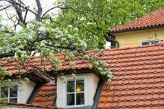 крыша стоковые изображения rf