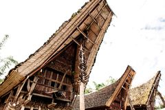 Крыша tongkonan с рожками буйволов, традиционных torajan зданий Этническая деревня Kete Kesu в Tana Toraja, Индонезии Стоковая Фотография RF