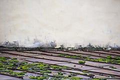 Крыши металла покрыты с мхом и яркой побеленной стеной стоковые фото