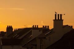 Крыши около моря, заход солнца Стоковая Фотография RF
