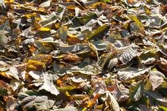 Крышка листьев падения Стоковая Фотография RF