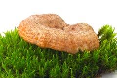 Крышка молока шафрана стоковое изображение rf