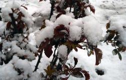 Крышка снега на ломать сад спячки Стоковые Изображения