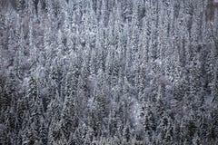 Крышка снега на полесье леса горы белом стоковые изображения