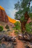 Крышка стены каньона ландшафтом оврага койота света захода солнца красивым Стоковое Изображение