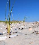 Крышка Seashell стоковое изображение