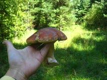 Крышки апельсина гриба стоковые фото