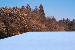 Крышки снега в зиме Стоковая Фотография RF