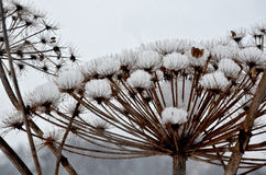 Крышки снега, зимнее время, предпосылка Стоковое фото RF