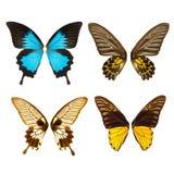 Крыла бабочки Стоковые Фотографии RF