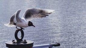 Крыла птицы Стоковое Изображение