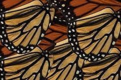 Крыло бабочки монарха Стоковое фото RF