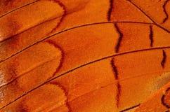 Крыло бабочки стоковая фотография