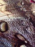 Крыло бабочки Стоковое фото RF