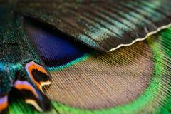 Крыло и перо бабочки Стоковые Изображения RF