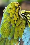 Крыло попугая Стоковое фото RF