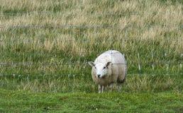 Кто сказало что трава не была зелене? Стоковое Изображение RF