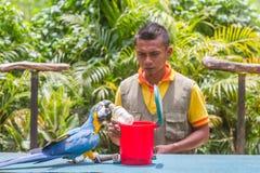 Куала-Лумпур, Malasia - 2-ое марта 2015: Тренер и натренированный Стоковые Изображения RF