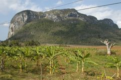 Куба, зона Viñales стоковое фото rf