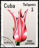 КУБА - ОКОЛО 1982: штемпель почтового сбора напечатанный в Кубе показывает розовый тюльпан Mariette Стоковая Фотография RF