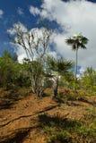 Куба, туристский след в Pico Turquino покрывает Стоковые Изображения
