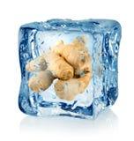 Кубик и имбирь льда стоковая фотография rf