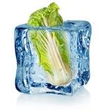 Кубик льда и китайская капуста стоковая фотография rf