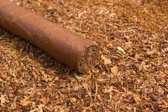 кубинец одно сигары Стоковые Фотографии RF