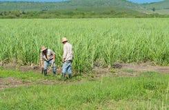 Кубинськие фермеры и жатки на тросточке field во время сбора - репортаж Serie Кубы Стоковые Фото