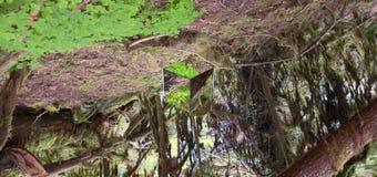 Куб зеркала в лесе стоковые фотографии rf