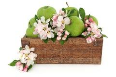 кузнец бабушки яблок Стоковое Фото