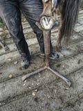 Кузнец доработать несенное и перерастанное копыто лошади стоковая фотография