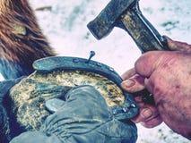 Кузнец пригвождает новый ботинок лошади на копыто стоковая фотография rf