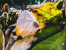 кузнечики 2 стоковое изображение