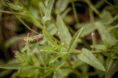 Кузнечик в зеленой траве стоковые изображения rf