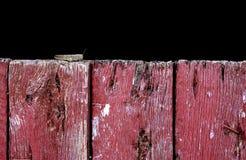 Кузнечик на древесине амбара Стоковое фото RF