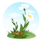 Кузнечик сидя на поле цветка Жизнь насекомых иллюстрация s детей Стоковое фото RF