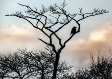 Кукарекайте в дереве, как раз охлаждая вне! стоковая фотография rf