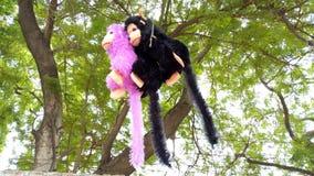 Кукла обезьяны вися от ветви дерева стоковые изображения