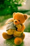 2 куклы медведя Стоковые Изображения
