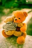 2 куклы медведя Стоковые Фото
