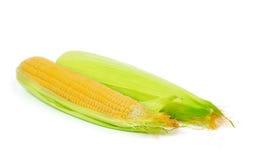 2 кукурузного початка изолированного на белизне Стоковые Изображения RF