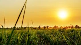 Кукурузное поле в заходе солнца Стоковые Фотографии RF