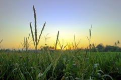 Кукурузное поле, заход солнца, предпосылка, зеленый цвет стоковые изображения