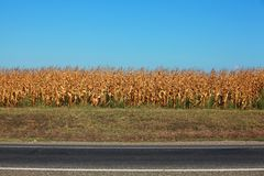 Кукурузное поле шоссе против голубого неба Стоковые Фото