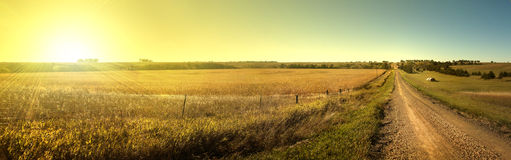 Кукурузное поле восхода солнца Стоковое Фото